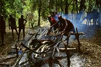 Roasting of meat over a fire during Maasai's Eunoto celebrations, Kenya
