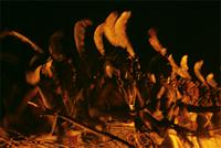 Woodabe winners of the Geerewol bathed in the glow of an enormous fire, Niger