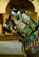 Horse with embroidered ceremonial harness decorated with gold metallic tinsel, and leather appliqué. Sallah celebrations, Hausa, Katsina, Nigeria.