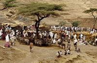 A weekly market in the foothills of the Rift Valley, Eritrea