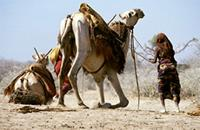 Nomads and camel at a well in the Ogaden.