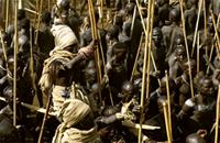 The victor of a donga stick fight is lifted onto a platform of donga sticks, Ethiopia