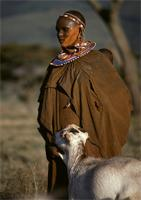Maasai woman leading goat into the house.