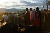 Father of Maasai initiate blessing his cattle.