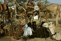 Possessions displayed on trees at Geerewol gathering, Woodabe people of Niger.