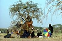 Woodabe dancers taking a rest under a tree, Niger