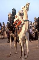 Cure Salee Ceremony-Camel races and women
