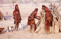 Himba women and baby goats.