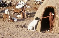 Himba child in doorway next to dog and goats.