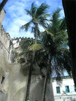 Photograph of the Tower and Palms