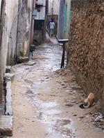Photograph of a street in Lamu