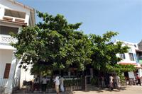 Stereoscopic Photographs of the Bush Garden Restaurant in Lamu, Kenya