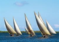 Boats participating in one of Lamu's sailing races.