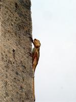 Image of a lizard on the exterior wall of the Besease Temple near Kumasi, Ghana