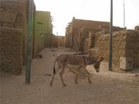 Image of a donkey in the streets of Timbuktu, Mali